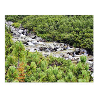 Cold Stream In High Tatras In Slovakia Postcard