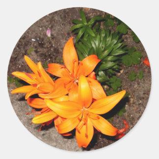 Colección anaranjada del recuerdo del flor pegatina redonda