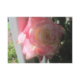 Colección color de rosa impresión en lona