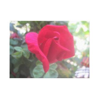 Colección color de rosa lienzo envuelto para galerías