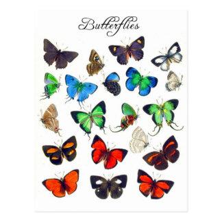 Colección colorida de la mariposa tarjetas postales