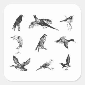 Colección de aves y de pájaros del agua del vuelo pegatina cuadrada