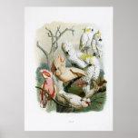 colección de impresión del vintage del loro 1848 poster