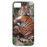 Colección de impresión salvaje del tigre iPhone 5 cobertura