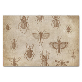 Colección de insectos - expedición del vintage papel de seda pequeño