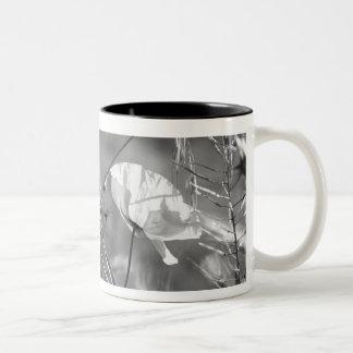 Colección de la amapola taza