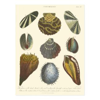 Colección de la conquiliología postal
