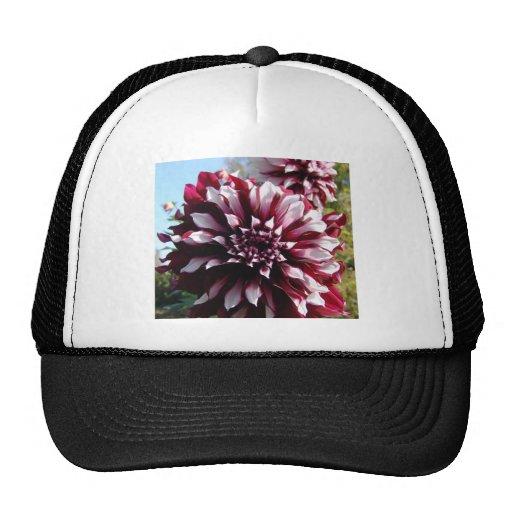 Colección de la flor de mi esposa gorros