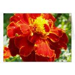 Colección de la flor de mi esposa tarjetas