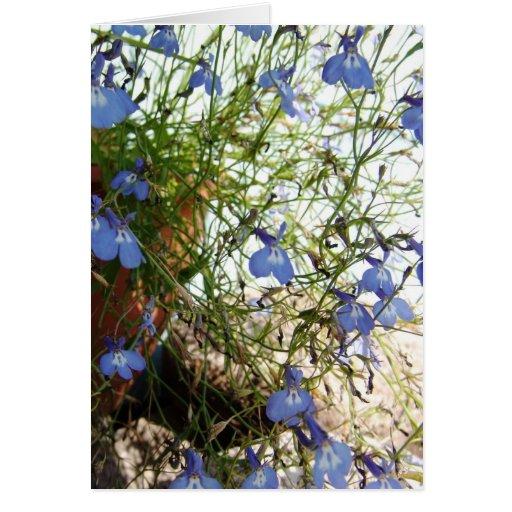 Colección de la flor de mi esposa tarjeton