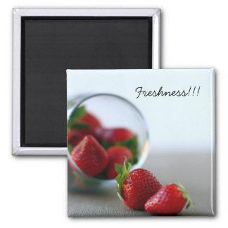 Colección de la fresa del verano imán para frigorífico