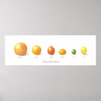 Colección de la fruta cítrica impresiones