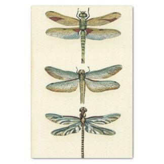 Colección de la libélula de Chariklia Zarris Papel De Seda Pequeño