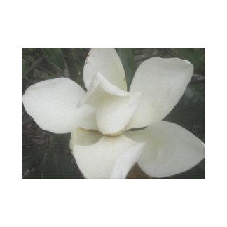 Colección de la magnolia impresion de lienzo
