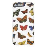 Colección de la mariposa