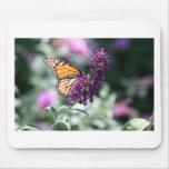 Colección de la mariposa de monarca - cojín de rat tapete de ratón