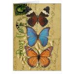 Colección de la mariposa felicitacion