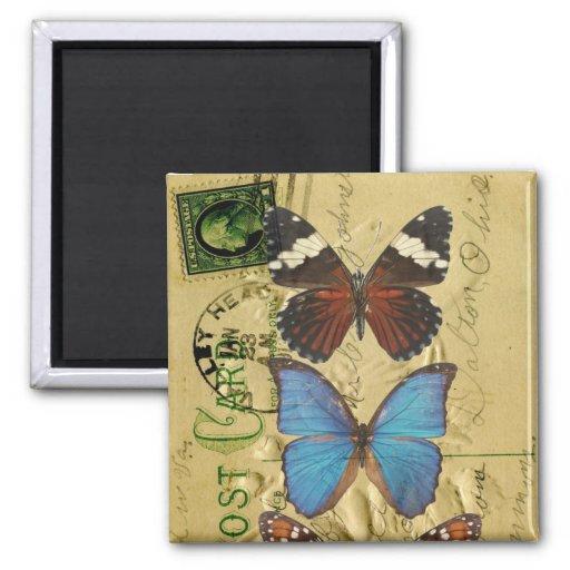 Colección de la mariposa imán cuadrado