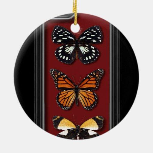 Colección de la mariposa ornatos