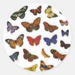 Colección de la mariposa pegatinas