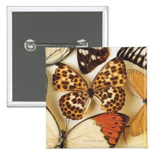 Colección de la mariposa pin cuadrado
