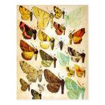 Colección de la mariposa tarjetas postales