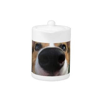 Colección de la nariz de perro del Corgi Galés