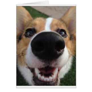 Colección de la nariz de perro del Corgi Galés Tarjeta De Felicitación