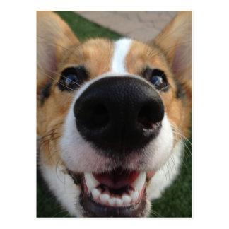 Colección de la nariz de perro del Corgi Galés Tarjetas Postales