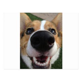 Colección de la nariz de perro del Corgi Galés Postal