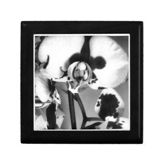 Colección de la orquídea de B&W Cajas De Regalo