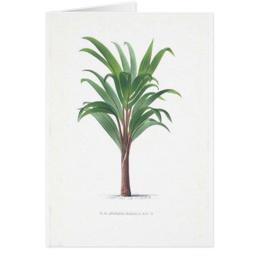 Colección de la palma - dibujo III Tarjeta De Felicitación