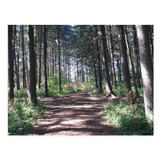 Colección de la trayectoria de bosque tarjetas postales