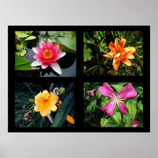 Colección de las flores del bonito poster