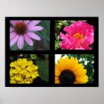 Colección de las flores del bonito posters