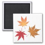 Colección de las hojas de arce del otoño iman para frigorífico