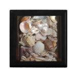 Colección de Shell Caja De Joyas