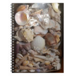 Colección de Shell Libros De Apuntes