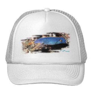 Colección del acuario por FishTs.com Gorras De Camionero