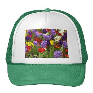 Colección del arco iris gorras