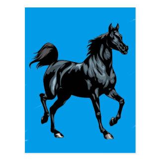 Colección del caballo postales