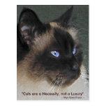 Colección del CAT de BIRMAN RAGDOLL Tarjetas Postales