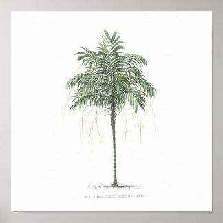 Colección del ejemplo de la palmera póster