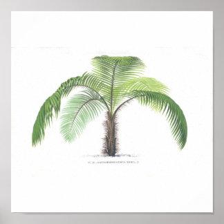Colección del ejemplo III de la palmera Póster