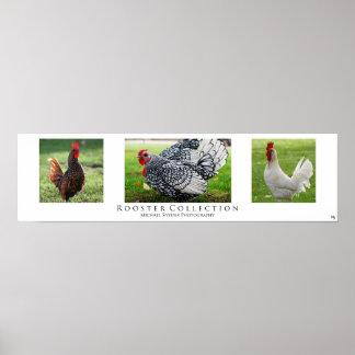 """""""Colección del gallo"""", blanca Impresiones"""