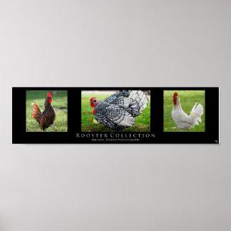 """""""Colección del gallo"""", negra Impresiones"""