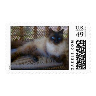 Colección del gatito de los ojos azules estampilla