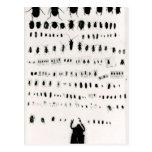 Colección del insecto de Darwin Postal