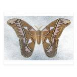 Colección del insecto - polilla postal