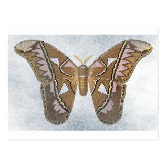 Colección del insecto - polilla postales